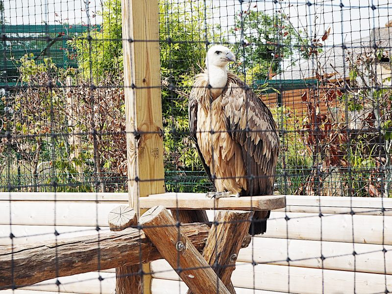 tayto park animals birds falconry