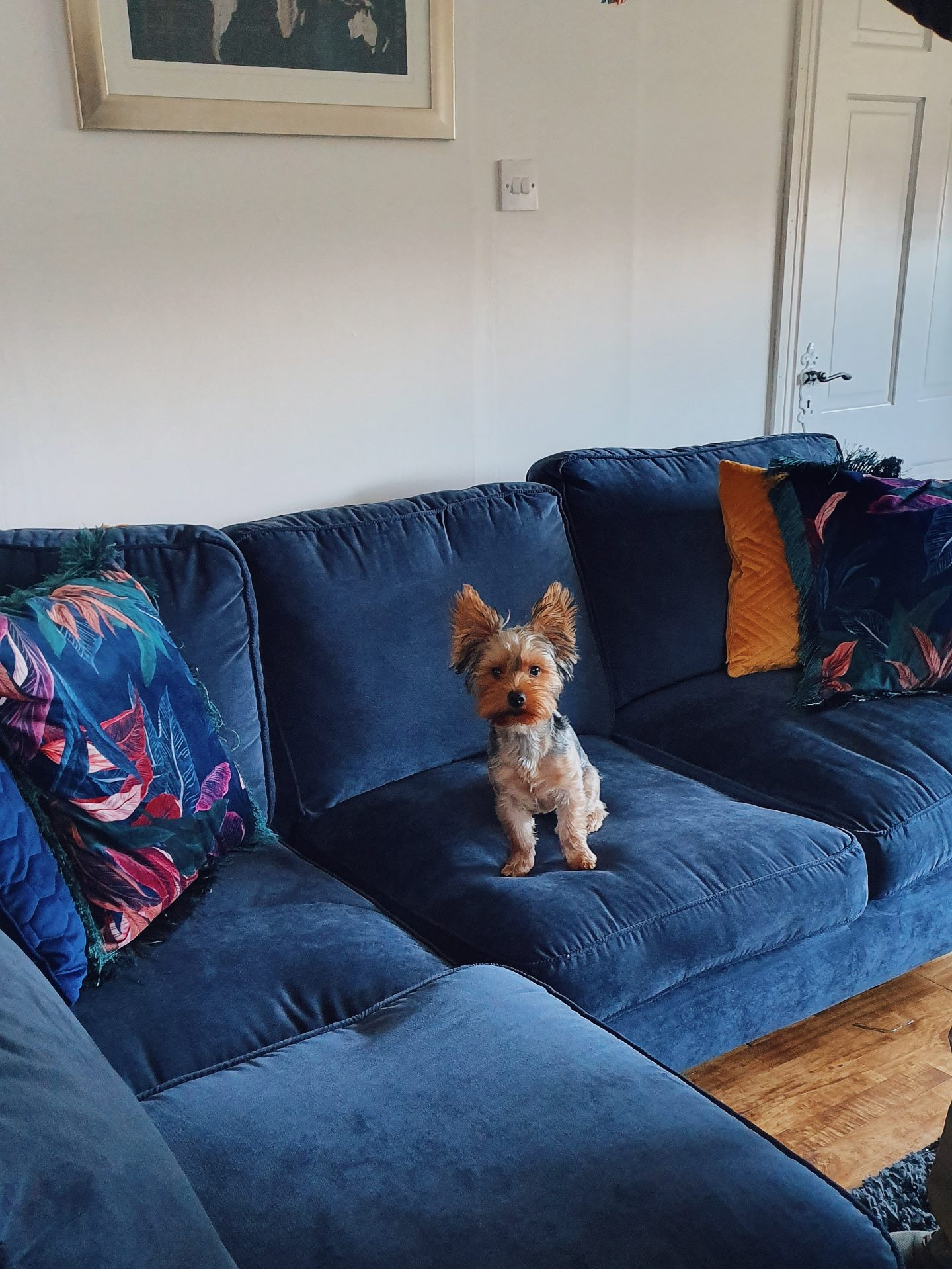 diy living room renovation navy sofa yorkshire terrier dfs